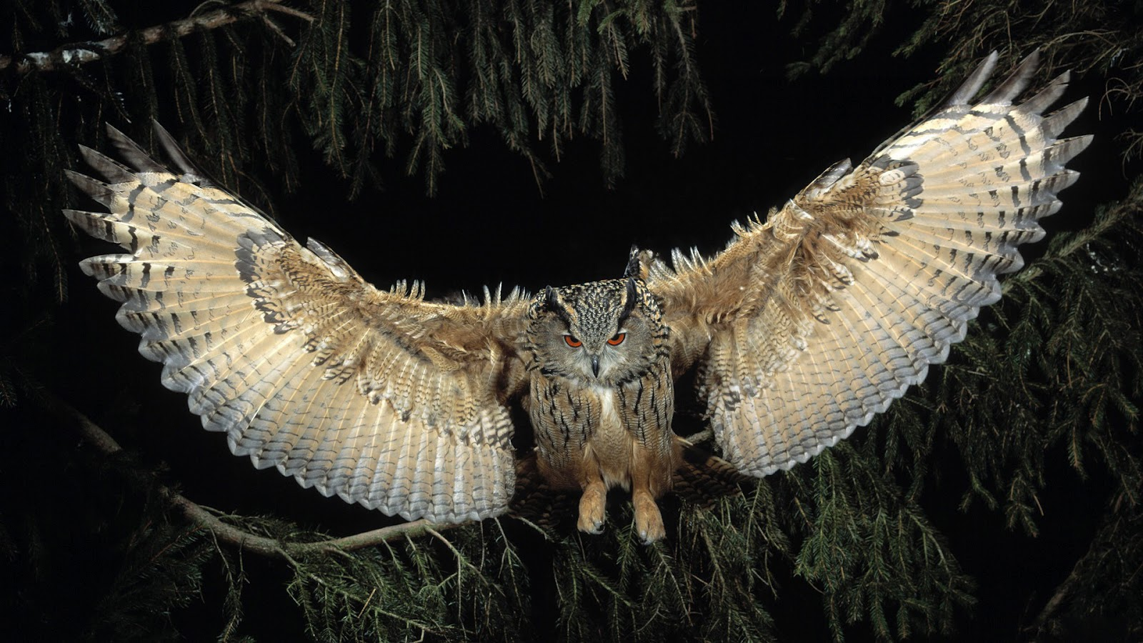... Owl Full HD... Owl Desktop Wallpaper Hd