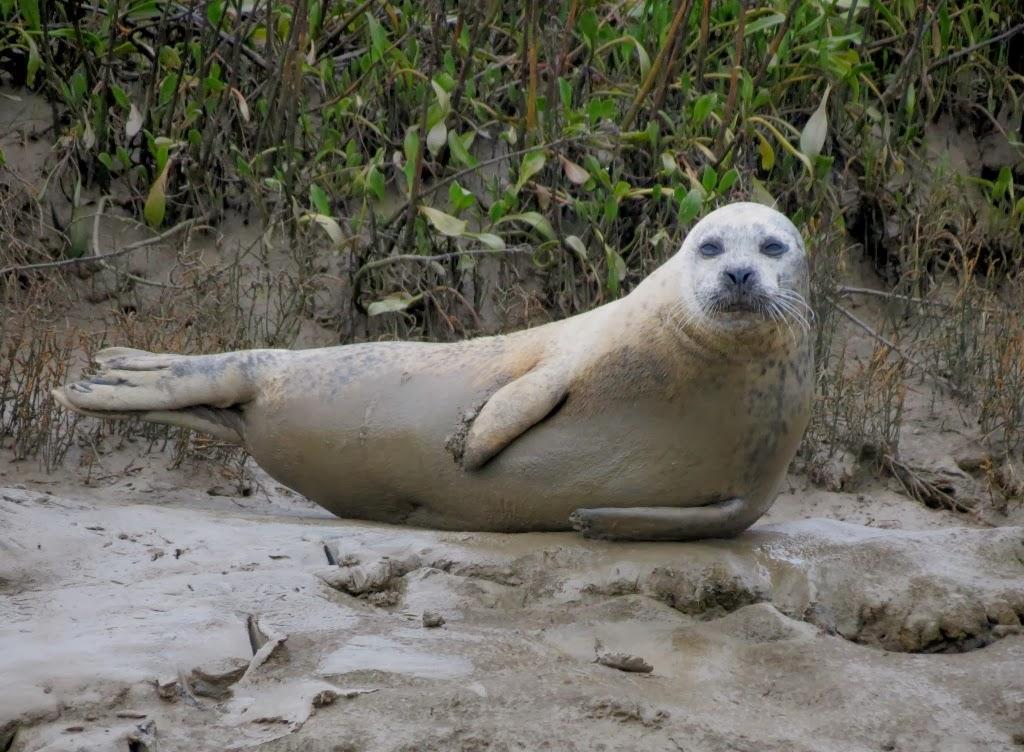 Does Mersea Island Get Cut Off