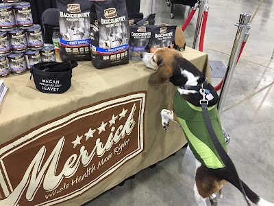 Lulu sniffs out the Merrick Backcountry Hero's Banquet food at BlogPaws.