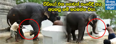 This video will make you cry - Elephant harassment