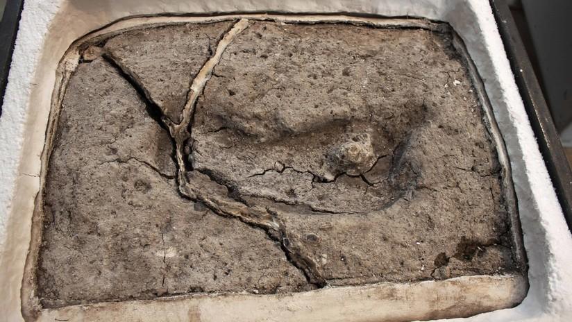 Huella humana más antigua de América, hallada en Pilauco (Chile). Foto: Universidad Austral de Chile