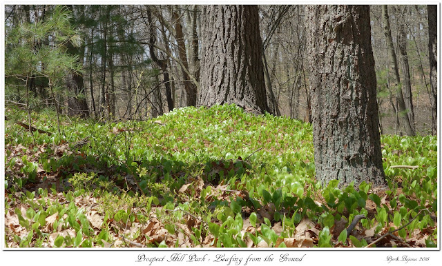 Prospect Hill Park: Leafing from the Ground