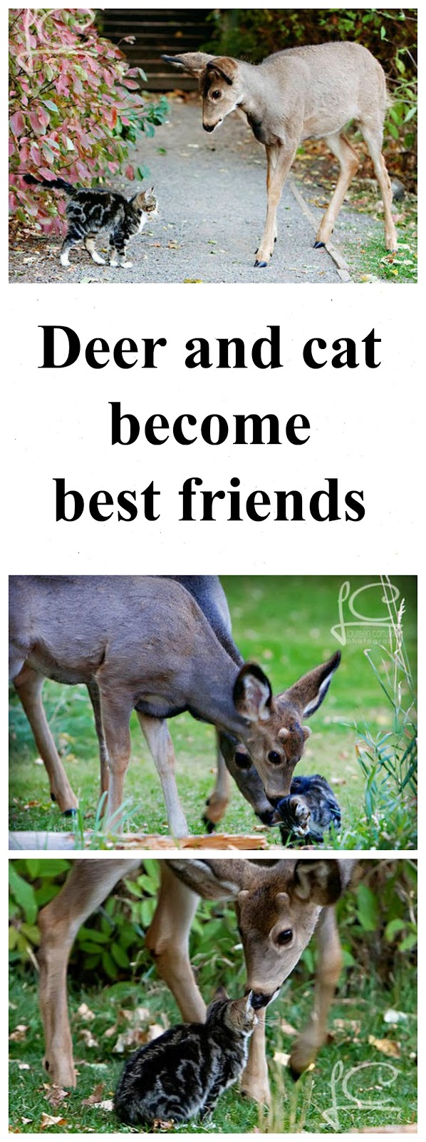 cute animals deer cats pets