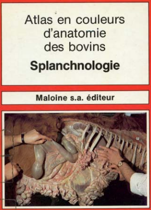 Atlas d'anatomie des bovins splanchnologie -WWW.VETBOOKSTORE.COM