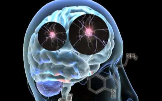 suplemen-otak