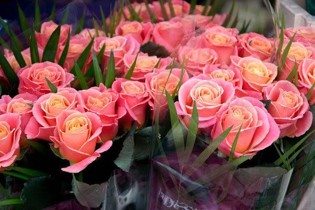 Gorgeous Pink Roses