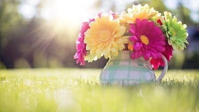 Resultado de imagem para spring