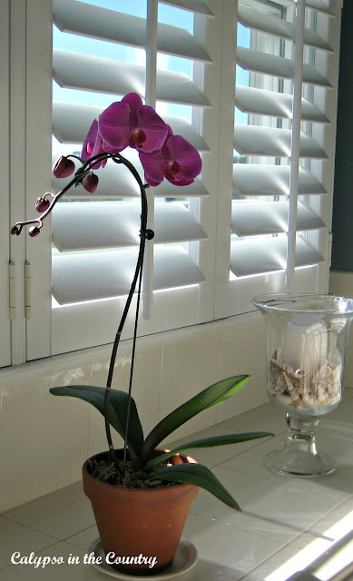Plantation Shutters - a classic look that works in almost any room