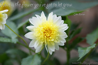 FLOWER QUOTES WALLPAPER