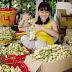 Danh sách các doanh nghiệp nhập khẩu hàng nông sản của Algeria