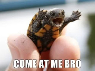 come at me bro turtle, turtles, turtles funny picture, turtle funny picture, turtle, come at me bro