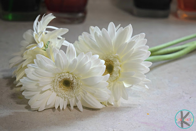 white-gerbera-daisy-kids-activity