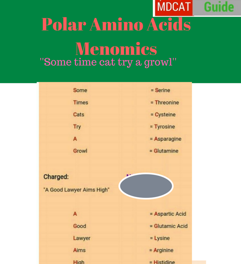 amino acids mnemonics easy way to memorize mdcat guide