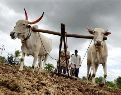 Indian agriculture भारतीय कृषिव्यवस्था