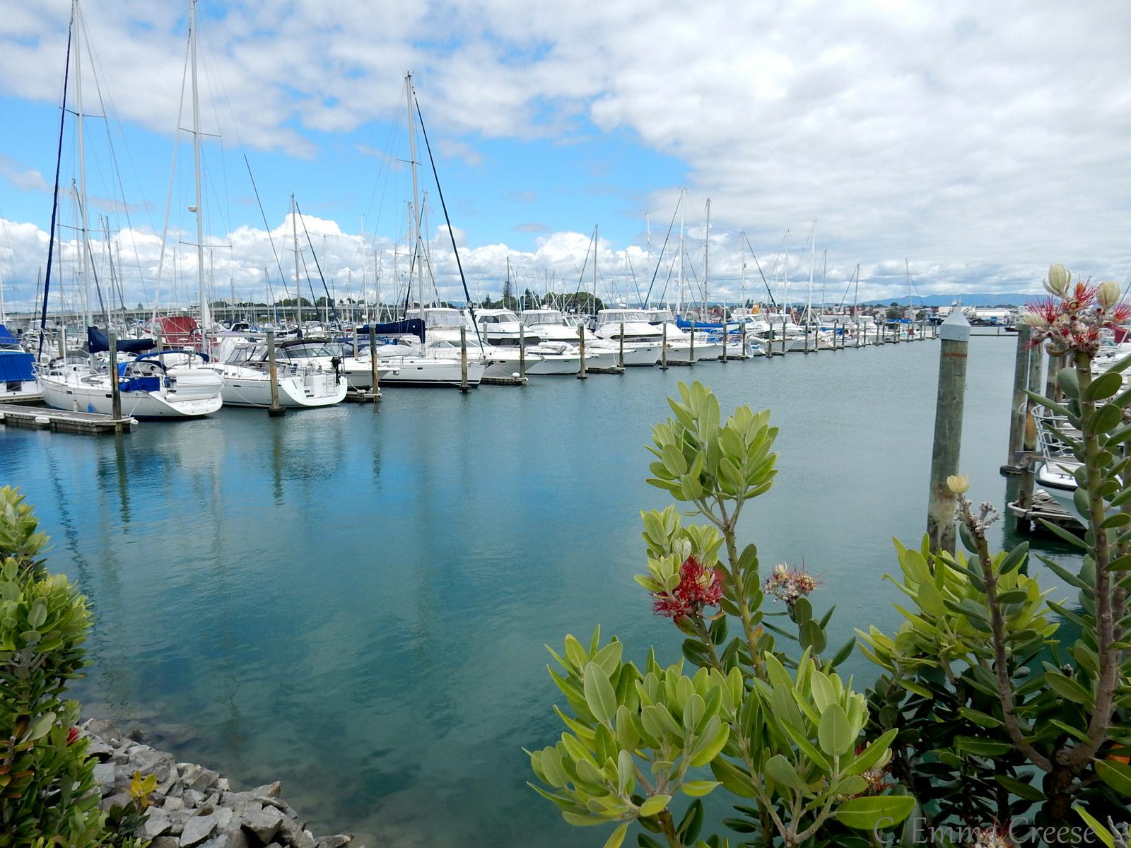 Tauranga Harbour Adventures of a London Kiwi