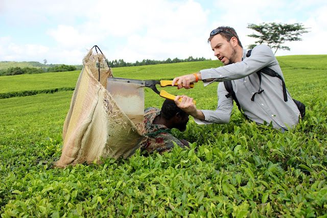 Picking tea leaves with Fraser at Satemwa Tea Estate, Thyolo, Malawi