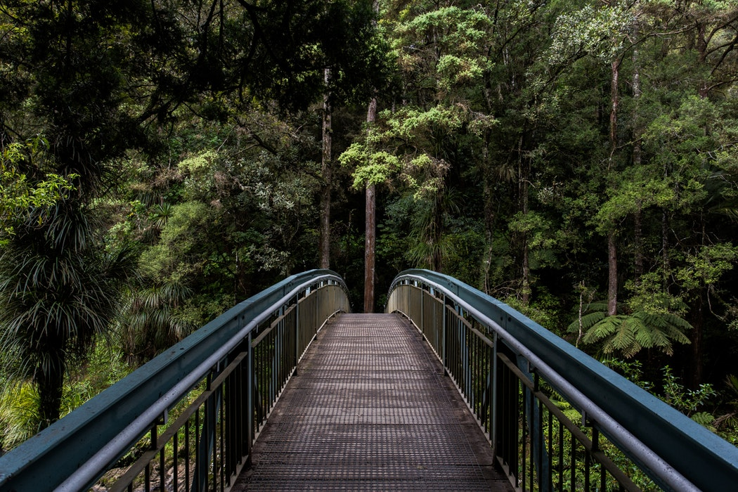 Whangarei Falls, Kauri Park Walkway to Whangarei Falls, New Zealand