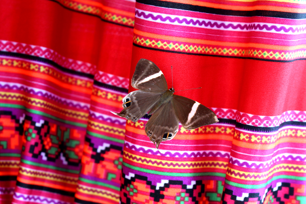Butterfly in Sapa, Vietnam - travel blog