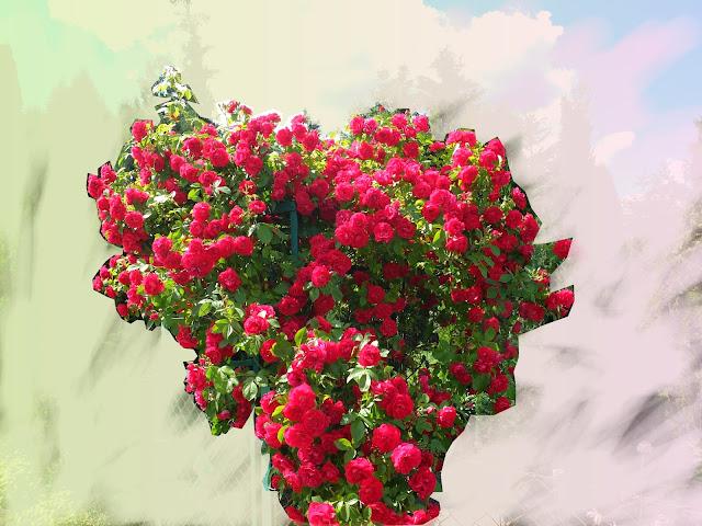 wild-roses-oliwia-blawat-01
