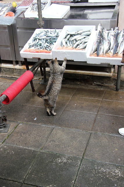 porto market cat stealing fish
