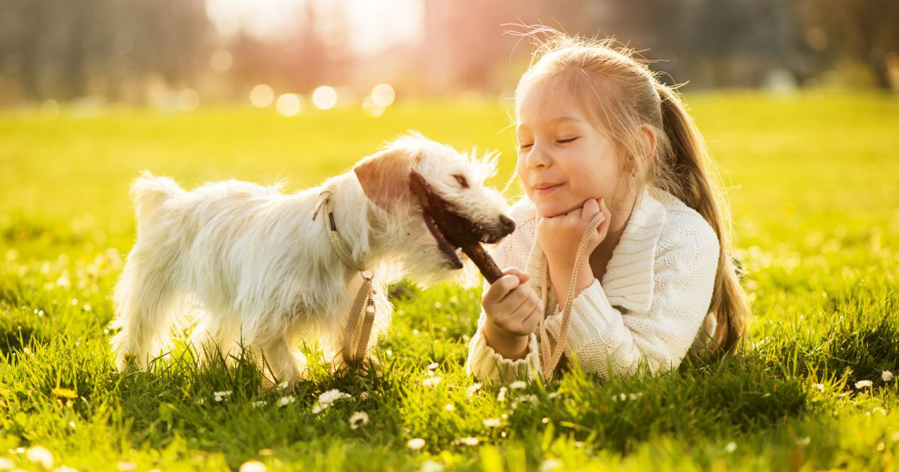 Young girl playing with a young white puppy holding a stick in its mouth