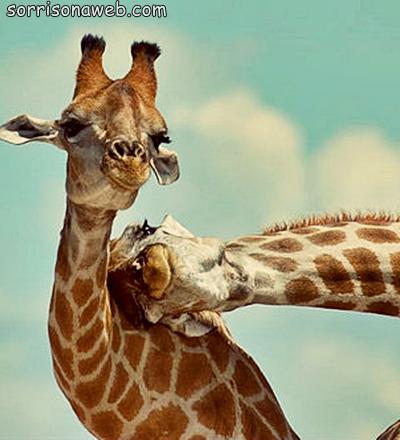 Girafa - Sorriso na Web