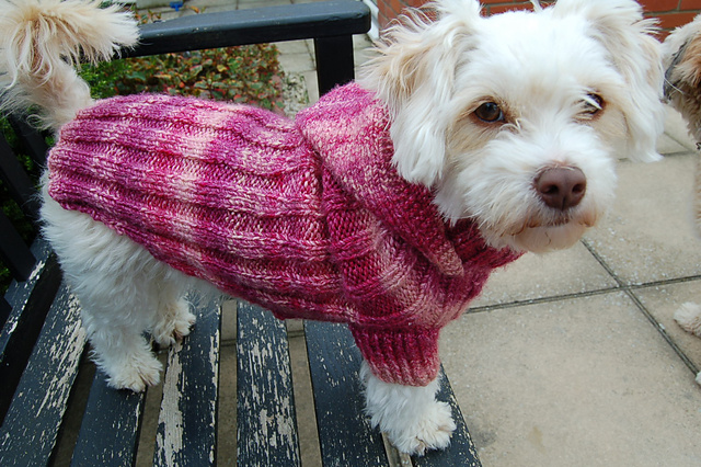 Knitting Pattern For Dog Coat Large : Miss Julias Patterns: Free Patterns - Everything for Dogs - Coats & ...