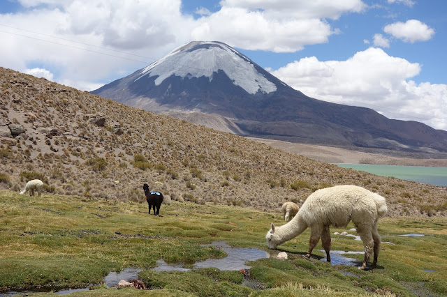 lauca national park chile