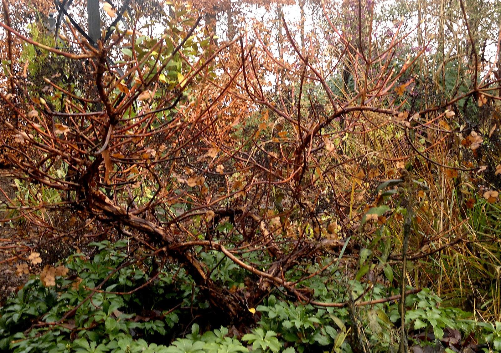 pletter på æbletræets stamme