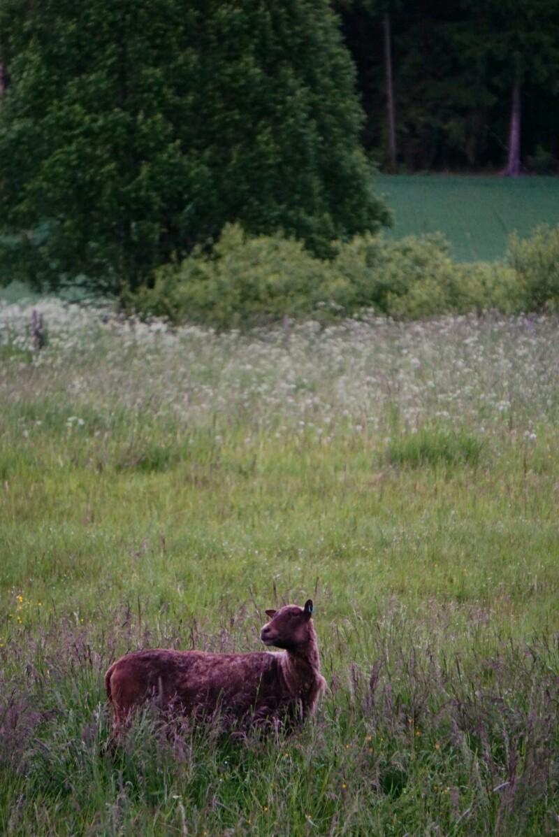 Lammas, laidun, juhannusyö