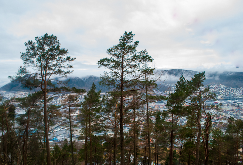 Trees and view from mount floyen in bergen norway