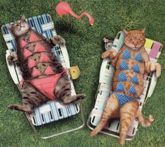 Cats with bikinis