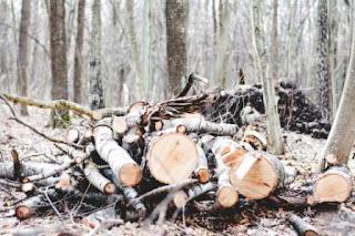 Menyorot Aktivitas Illegal Logging, Kejahatan Lingkungan sekaligus Kejahatan Kemanusiaan