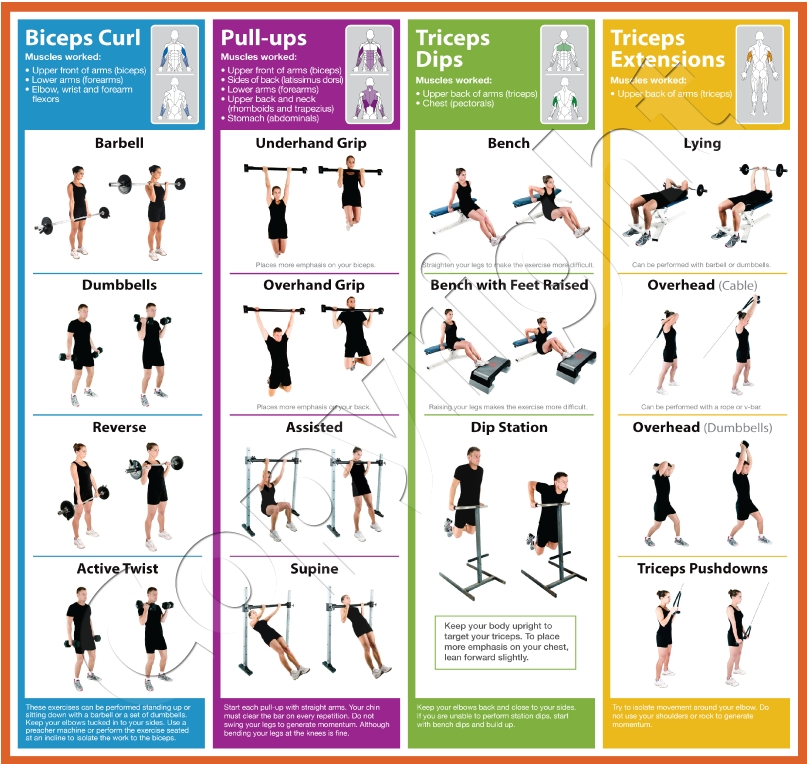 The Complete 4-Week Beginner's Workout Program | Muscle ...