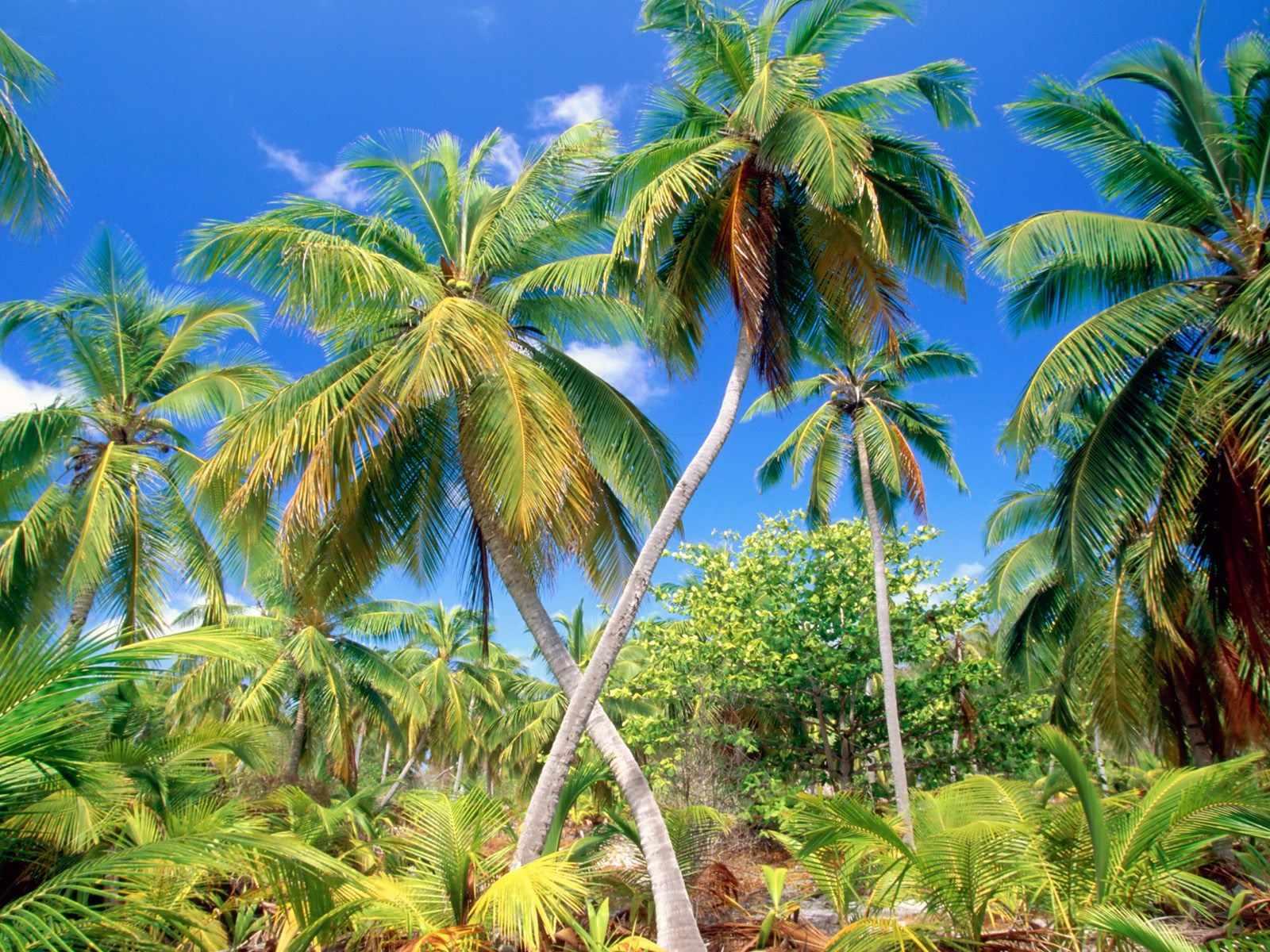 La Iphone Wallpaper Zoom Dise 209 O Y Fotografia Imagenes De Para 237 Sos Tropicales