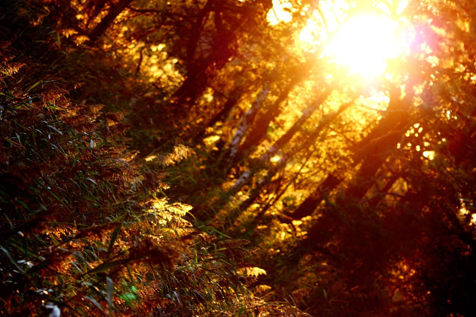 Fall Autumn Wallpaper 214 Regrund Free Images H 246 Stbilder
