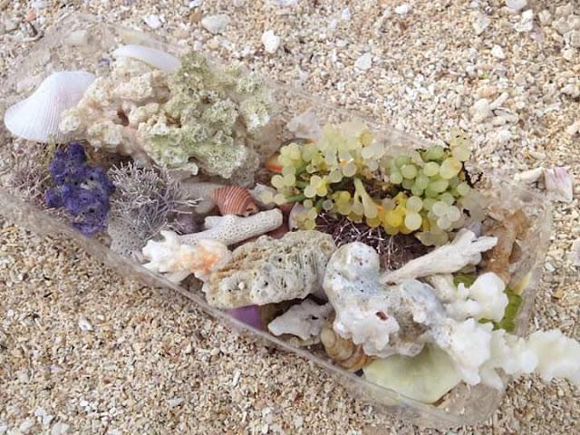 biota laut yang cantik di pantai cukoh