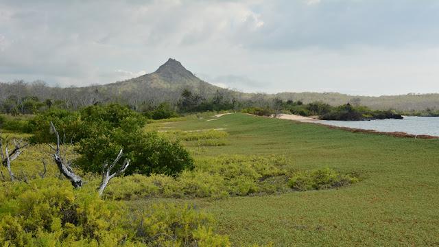 Cerro Dragon Galapagos
