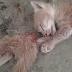Astaghfirullahalazim! Anak Kucing Putus Dua