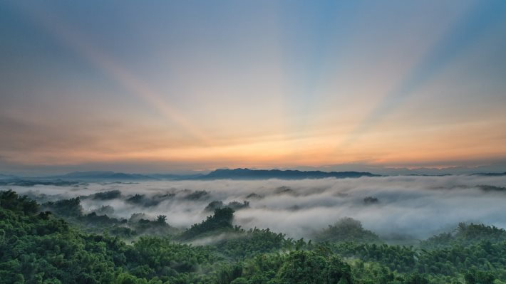 Wallpaper: Sun rising over the forest covered in fog
