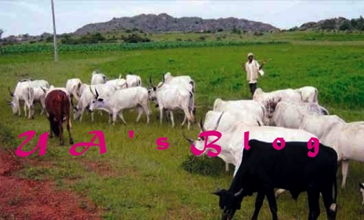 Lawyers, Miyetti Allah Divided Over Open Grazing Ban