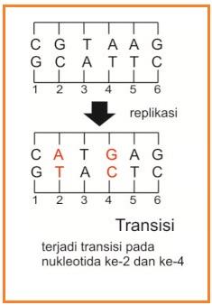 (DOC) makalah mutasi.docx | ayu putri - Academia.edu