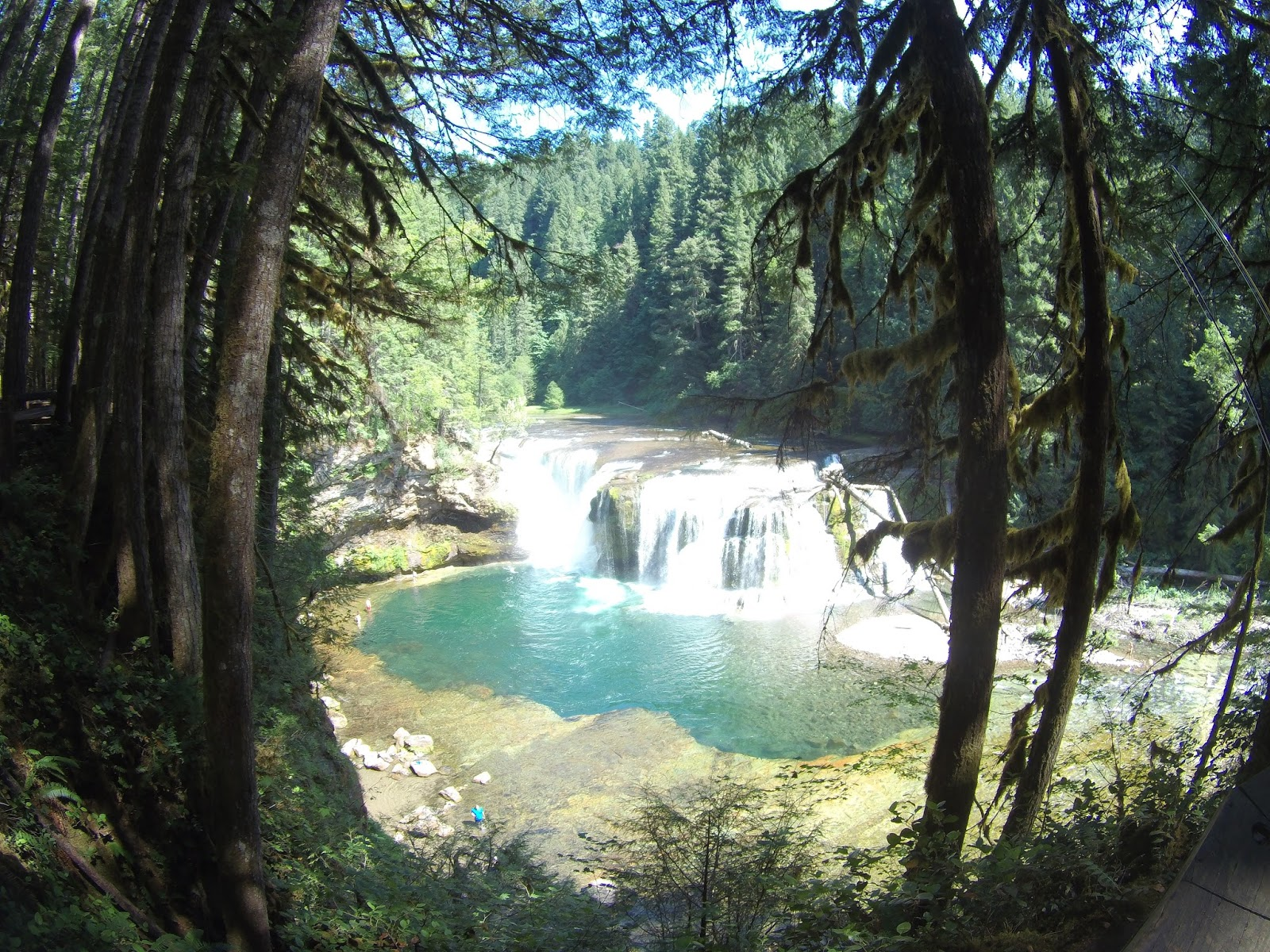 Travel trip report washington state upper north fork for Lewis river fishing report