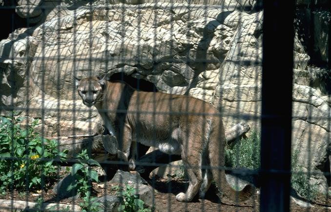 Best Jungle Life: world most dangerous animals wallpapers