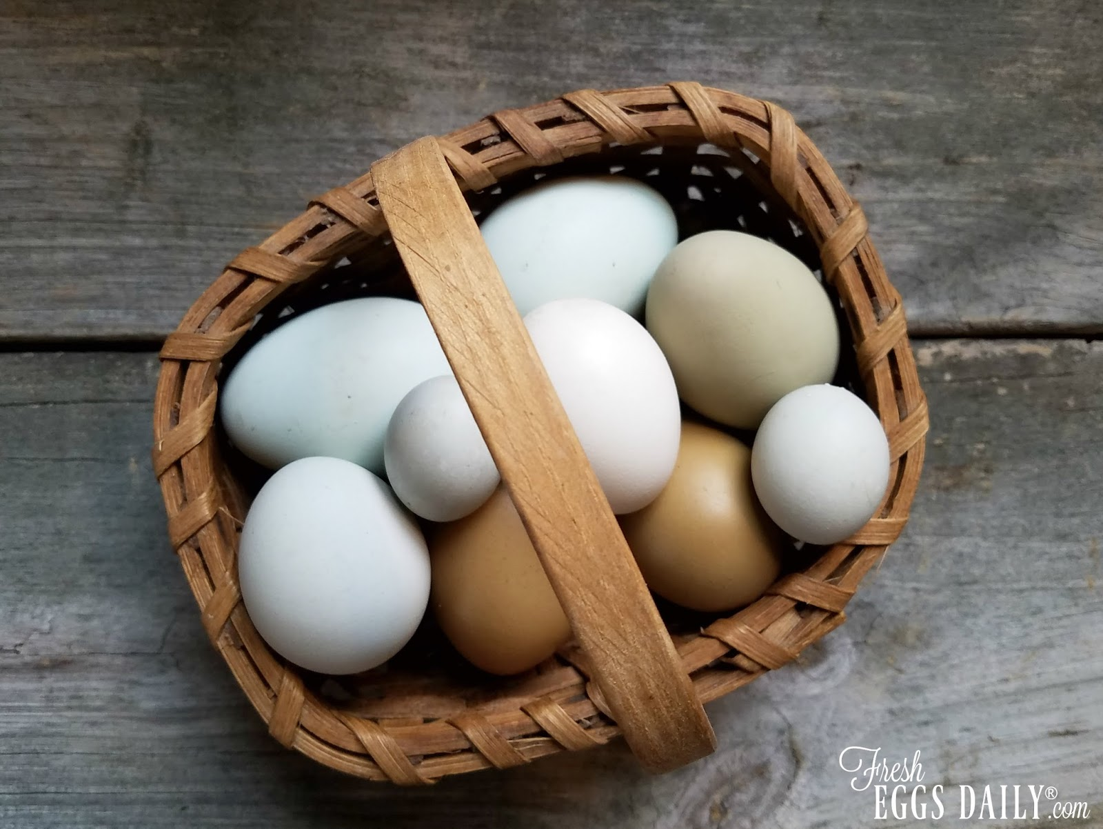What Is A Fairy Egg And Why Do Chickens Lay Them Fresh