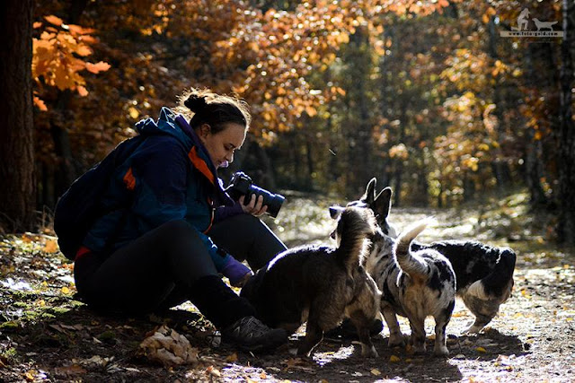 kampinoski park narodowy, w lesie z psem, spacer z psem po lesie, spacer z psem, welsh corgi, welsh corgi cardigan, cardigan, las, kampinos, yuma, twiggy, biba, cardimania