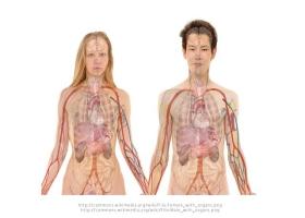 Body system.