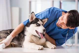 Si cuidas a tu perro, lo disfrutarás más. Tener un perro sano y feliz depende de su capacidad para satisfacer sus necesidades