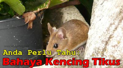 http://www.kateginting.com/2017/04/anda-perlu-tahu-bahaya-kencing-tikus.html