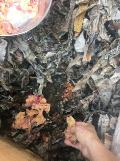 Photo of hand putting cooked apple peels into worm bin of red wriggler worms for vermiculture composting. https://trimazing.com/
